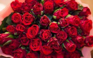 Размножение роз методом буррито. Методом буррито иногда получается черенковать розы из подарочных букетов, но в открытом грунте они растут плохо.