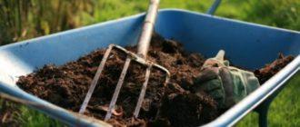 Органические удобрения для садовых роз