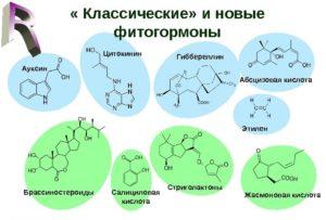 В настоящее время создание и испытание новых фитогормональных препаратов продолжается.