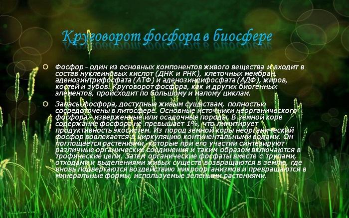 Фосфор – один из важнейших элементов для всех живых организмов.