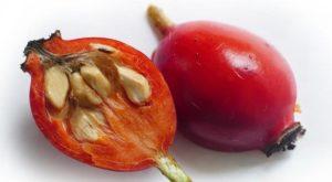 Семена нужно тщательно отделить от мякоти, чтобы они не загнивали при прорастании.