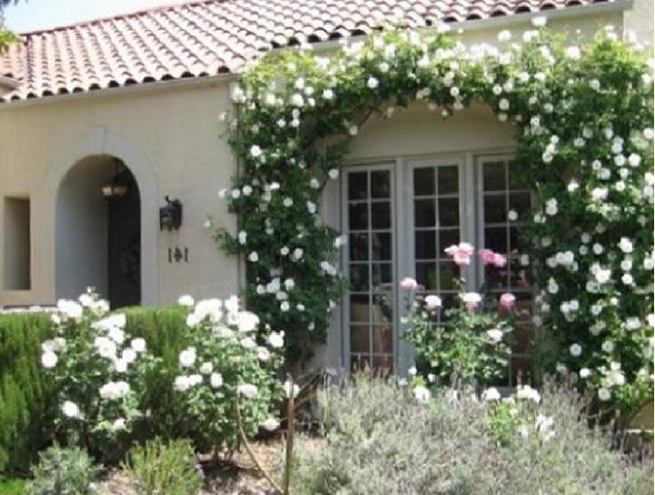 Сорт плетистой розы «Айсберг» незаменим для создания монохромных садов белого цвета. Этот прием особенно актуален на небольших участках, где важно создать иллюзию увеличения пространства с помощью колористического решения.