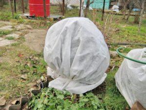 Воздушно-сухое укрытие из Спанбонда обеспечивает комфортный переход растений из стадии вегетации в состояние глубокого покоя.