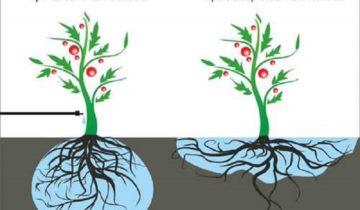 Капельный полив для садовых роз