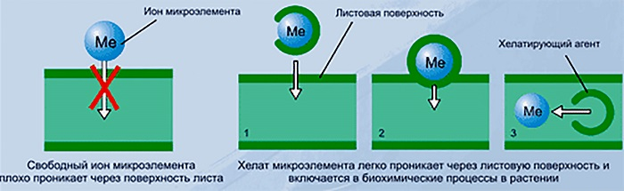 Хелат – это соединение органической молекулы с микроэлементом.