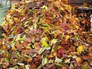Чаще всего листовой компост формируют из нескольких пород деревьев и кустарников