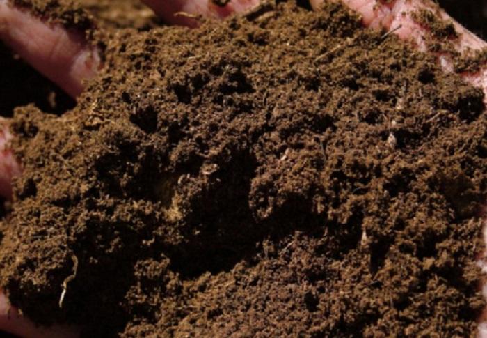 Торф низинный часто путают с питательным грунтом. Если высадить розы в чистый торф, то вместо обильного цветения, можно получить скромное выживание. Торф низинный используют как улучшающую добавку почвы.