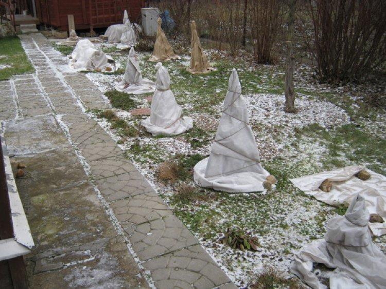 Готовыми защитными чехлами из нетканки удобно укрывать розы на зиму.