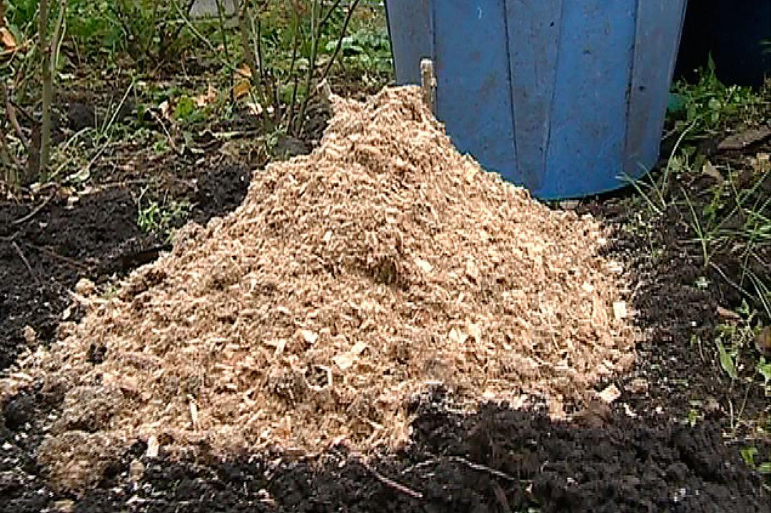 Осенью, пока не наступили заморозки, куст окучивают на высоту до 25 см и укрывают от холода опилками, хвойным лапником или сухой листвой