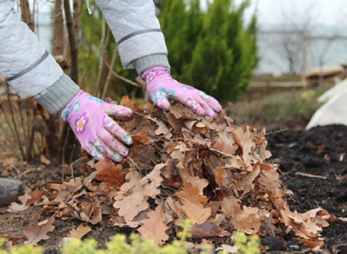 Органическая мульча больше подходит для мульчирования роз зимой, чем неорганическая.