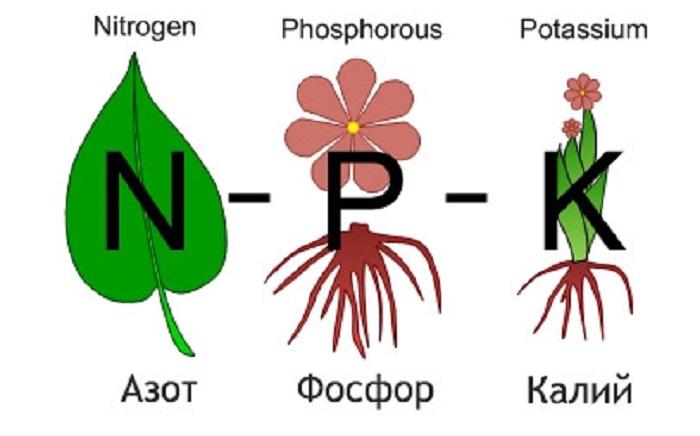 Баланс азота, фосфора и калия важен для правильного развития роз