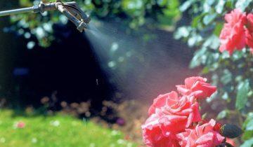 Стимуляторы роста для роз: обзор и применение