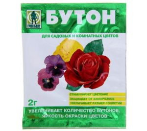 Через день после внекорневой подкормки роз, нужно обработать их стимулятором «Бутон» на основе гиббереллина – гормона, отвечающего за цветение растений