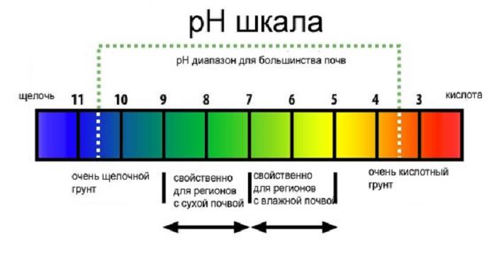 Для определения уровня рН, индикатор помещают в почвенный раствор, приготовленный в дистиллированной или кипяченой воде 1:2. После того, как земля осядет на дно, в жидкость опускают лакмусовую бумагу на несколько секунд. Затем, полоску подносят к цветовой шкале для определения кислотности.