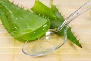 Для стимуляции окоренения черенков розы можно применять сок алоэ – 1 чайная ложка на 0,5 стакана воды.