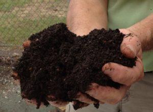 Зрелый компост – однородная масса, которая пахнет землёй и не содержит неперегнивших остатков навоза.