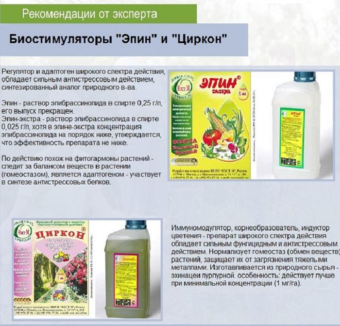 После лечения роз нужно провести серию опрыскиваний стимуляторами и адаптогенами «Эпин-Экстра» или «Циркон»
