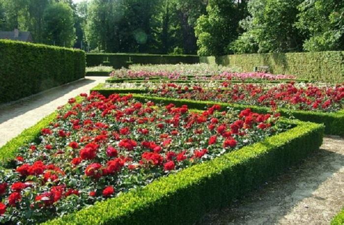 Как правило, в рабатках, так же как и в бордюрах высаживают розы одного сорта. Эффектно выглядят разноцветные фрагменты, очерченные стрижеными
