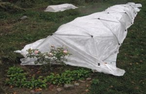 Для накрытия используют прочный каркас и плотный спанбонд. В суровые зимы его засыпают листьями или опилками и набрасывают снег.
