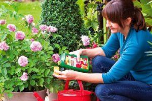 Минеральные удобрения и дрожжевые подкормки сочетаются только в присутствии достаточного количества органики в почве