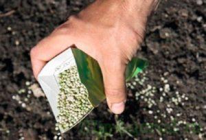 На тяжёлых грунтах калимагнезию заделывают в почву под розы на глубину 8 см, на лёгких – на 3-5 см.