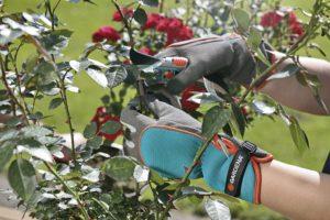 Перчатки с высокой манжетой особенно полезны для обрезочных работ в тёплое время года, когда руки мало защищены одеждой