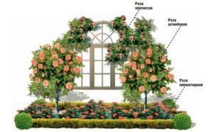 Грамотная организация размещения растений в розарии помогает избежать проблем с листьями роз