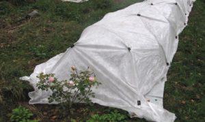 Все виды спанбонда подходят для защиты роз на зиму.