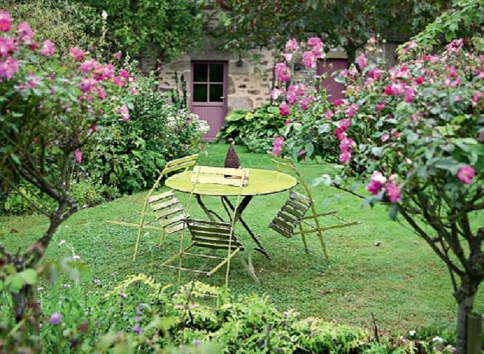 Штамбовые розы одни из самых эффектных кустов в саду. Они требуют к себе еще большего внимания, чем другие формы.