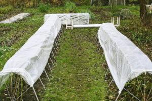 С самого начала осени можно соорудить укрытие – зонт, для того, чтобы при осенних дождях почва под розами не набиралась влаги. Таким образом, для последующего укрытия не потребуется ожидать, когда просохнет земля.
