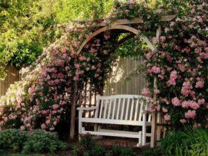 Внешний вид будущей перголы зависит от характеристик сорта розы.