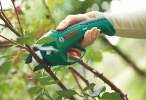 Для работы с розами важно приобрести хороший секатор, который не будет рвать кору.
