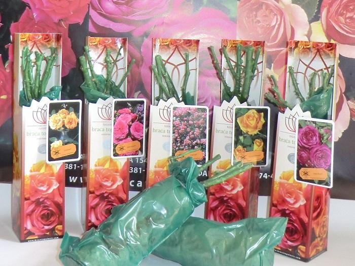 Передержка роз: способы сохранения саженцев до посадки.Для успешной передержки желательно, чтобы на купленном саженце не было развернувшихся листьев