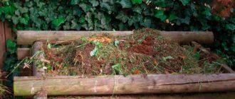 Одно из наиболее доступных удобрений для роз – компост. Его преимущество в том, что на его приготовление не нужно финансовых затрат. Потому что, он состоит их растительных остатков и пищевых отходов. По сути, из мусора