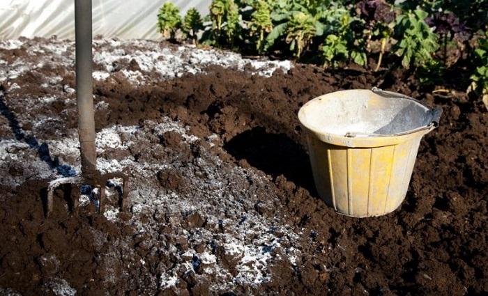 Кислой почве потребуется известкование как при подготовке к посадке, так и в период выращивания роз.