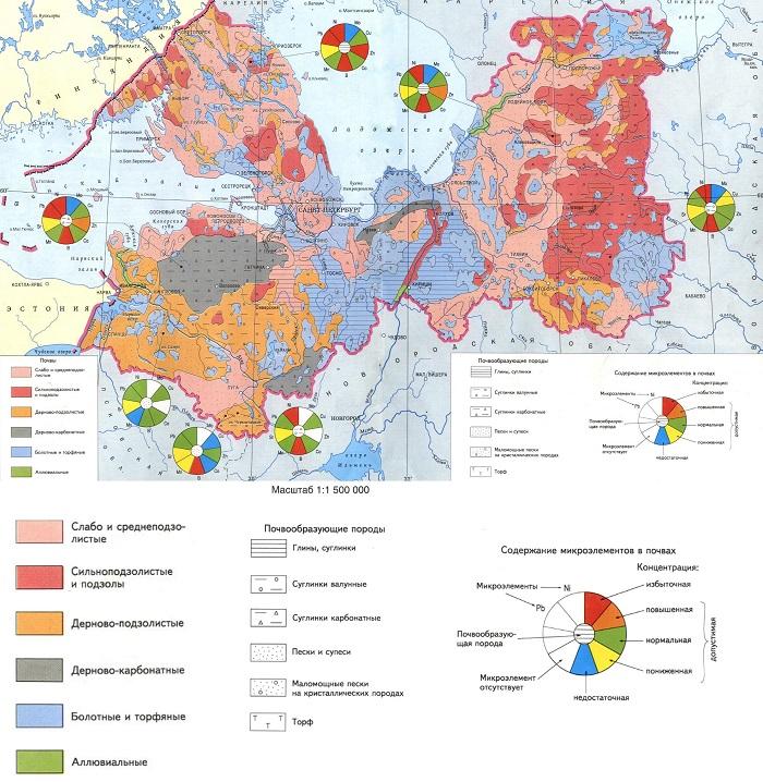 Почвы большей части территории Ленинградской области малопригодны для выращивания роз.