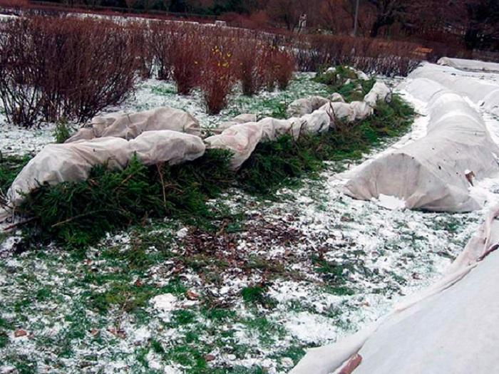 Сооружение зимних укрытий позволяет расширить ассортимент выращиваемых в данной климатической зоне роз