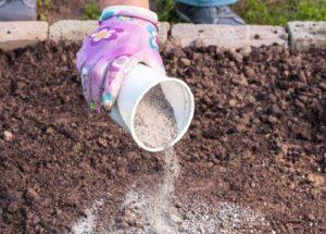 При подкормках роз золу тщательно смешивают с почвой.