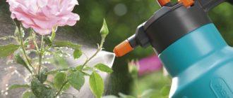 Микроудобрения для садовых роз