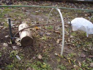 Такое положение предохранит побеги штамбовой розы от повреждения морозным воздухом.