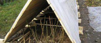 Для проветривания достаточно приподнимать укрывной материал в торцов укрытия