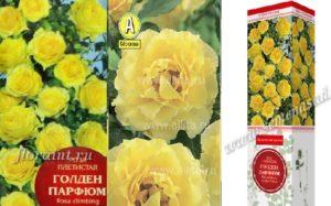 Внешне цветок Golden Parfum на коробках разных производителей отличается.