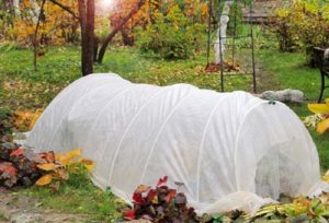 Спанбонд – наиболее удачный материал для укрытия роз.