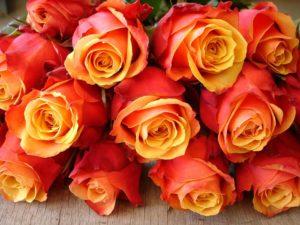 Розы Cherry Brandy, вовремя снятые с куста, стоят в срезке до 14 дней.