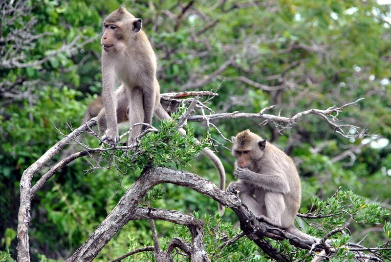 Остров Обезьян в Таиланде