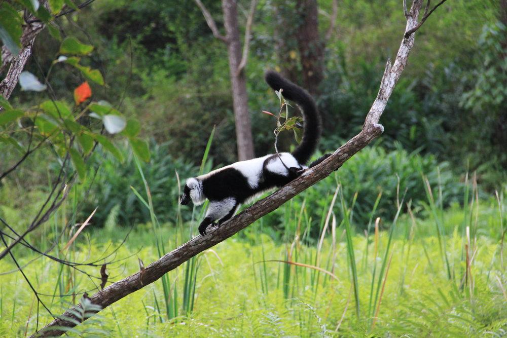 Достопримечательности Мадагаскар