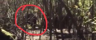 5 монстров на болоте снятых на камеру